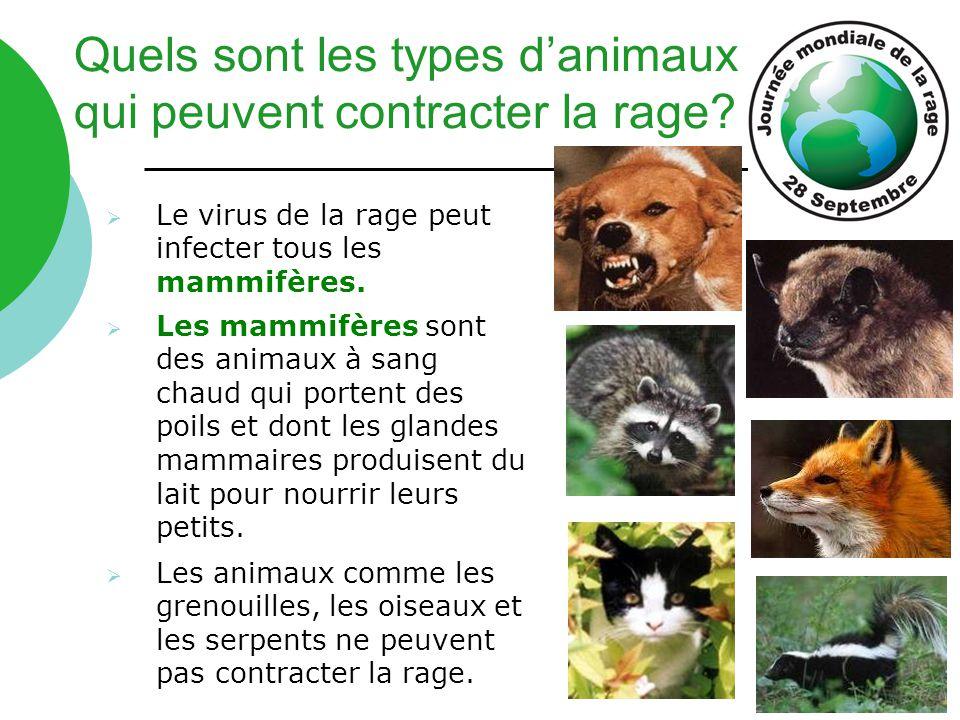Quels sont les types d'animaux qui peuvent contracter la rage