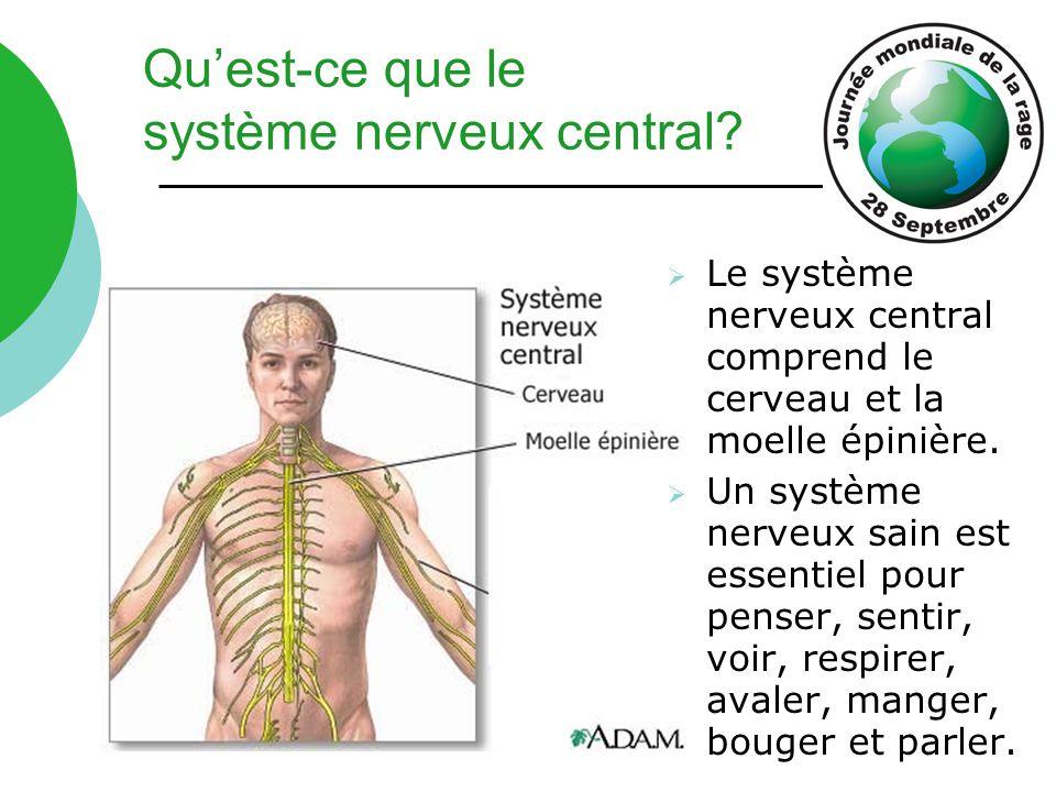 Qu'est-ce que le système nerveux central