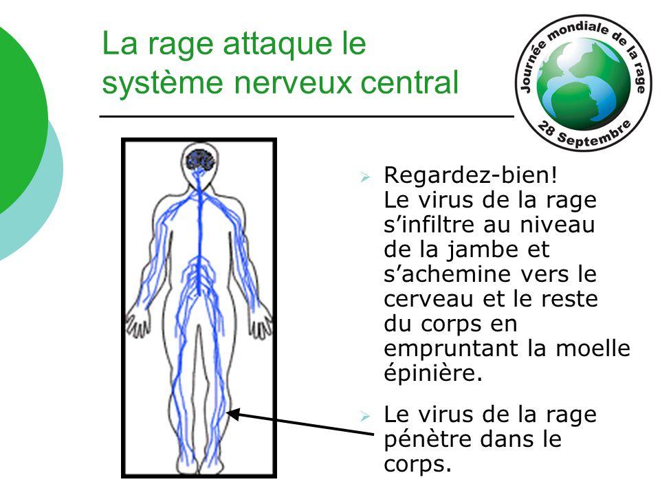 La rage attaque le système nerveux central