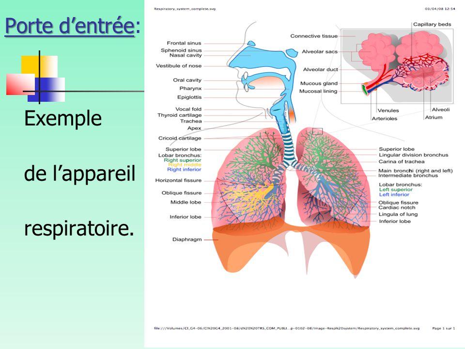 Porte d'entrée: Exemple de l'appareil respiratoire.