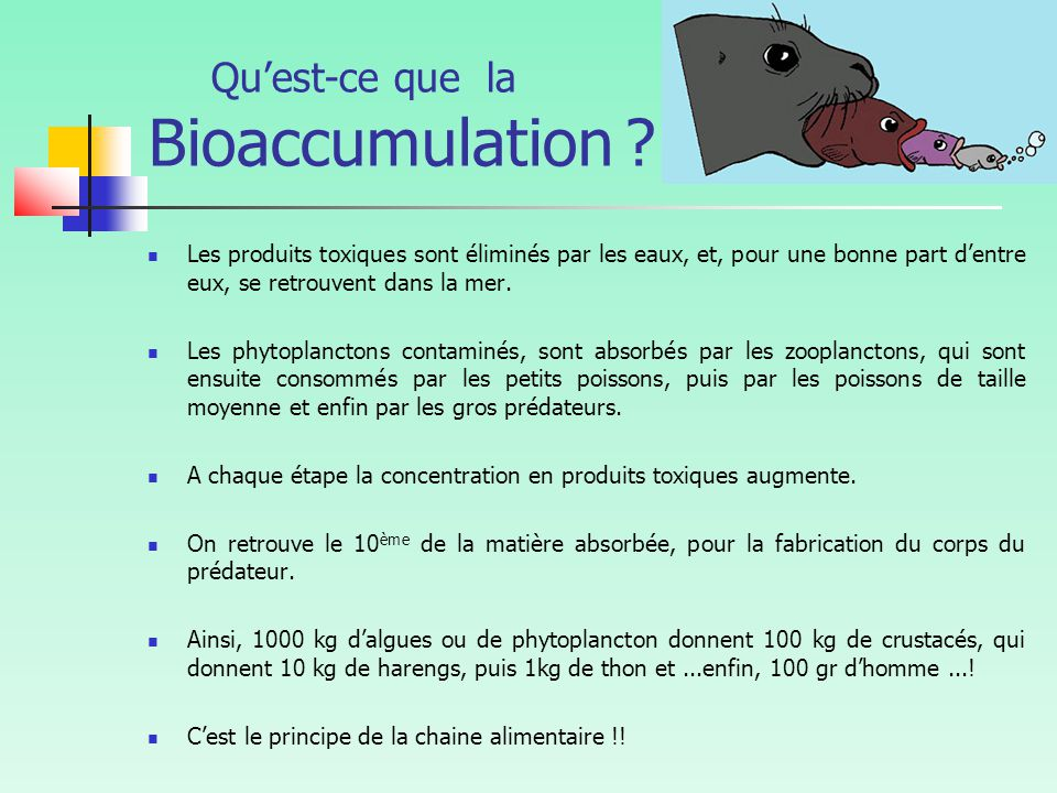 Qu'est-ce que la Bioaccumulation