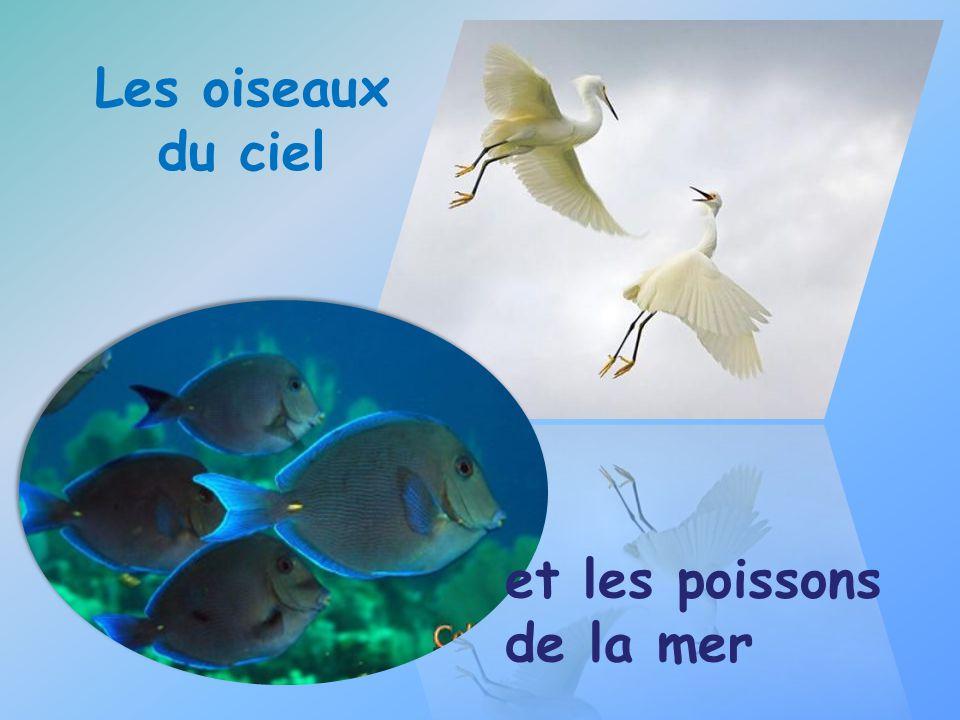 Les oiseaux du ciel et les poissons de la mer