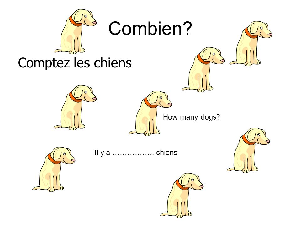 Combien Comptez les chiens How many dogs Il y a …………….. chiens