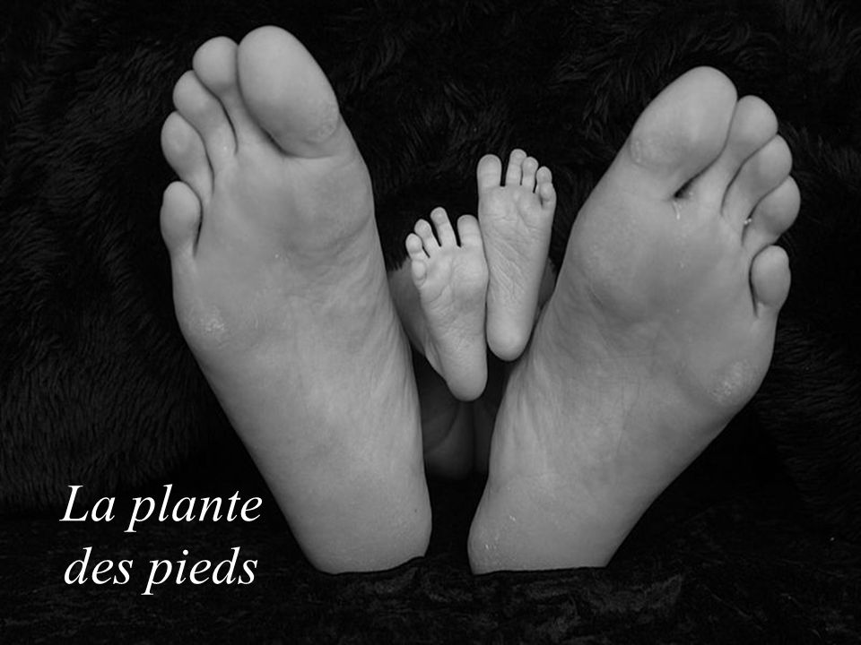 La plante des pieds