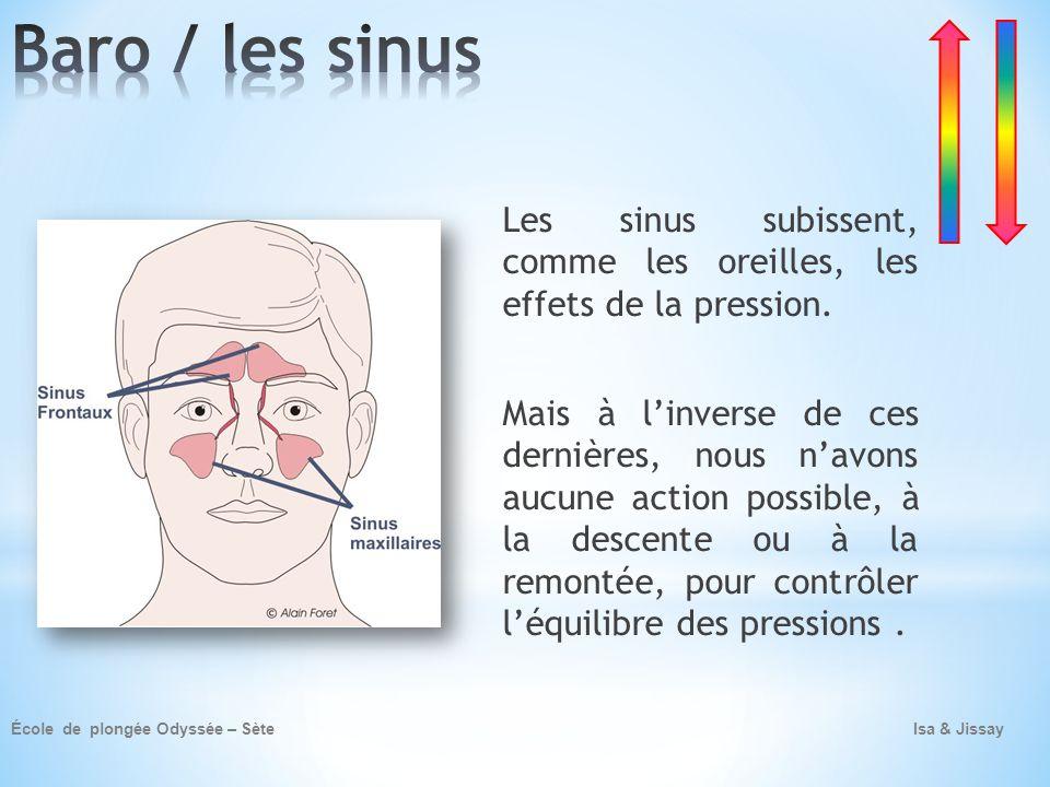 Baro / les sinus