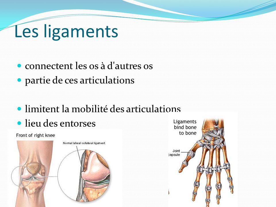 Les ligaments connectent les os à d autres os