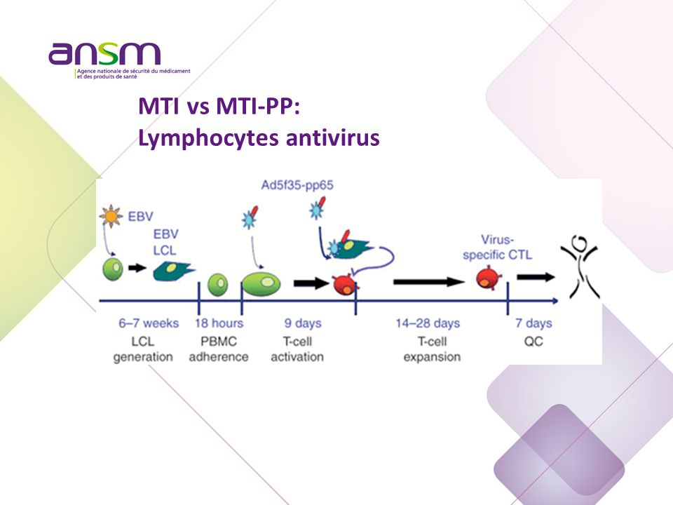 MTI vs MTI-PP: Lymphocytes antivirus