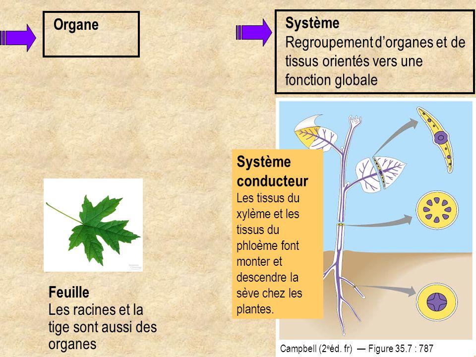 Les racines et la tige sont aussi des organes