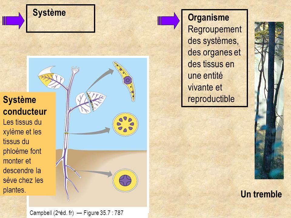 Système Organisme Regroupement des systèmes, des organes et des tissus en une entité vivante et reproductible.