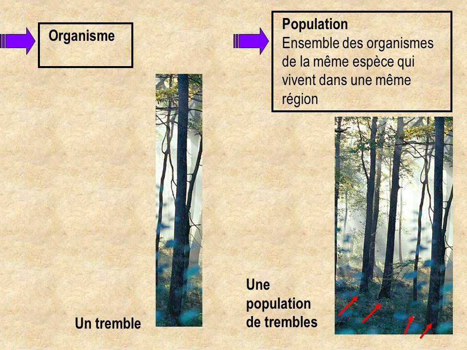 Population Ensemble des organismes de la même espèce qui vivent dans une même région. Une population de trembles.