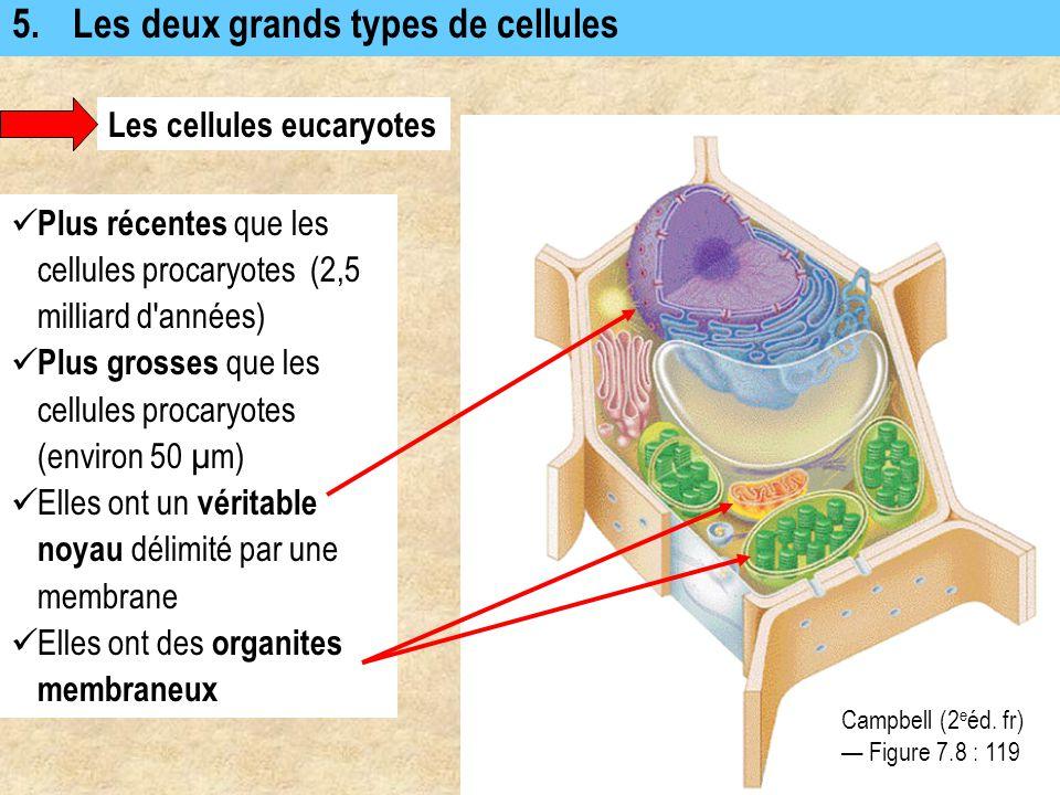 5. Les deux grands types de cellules