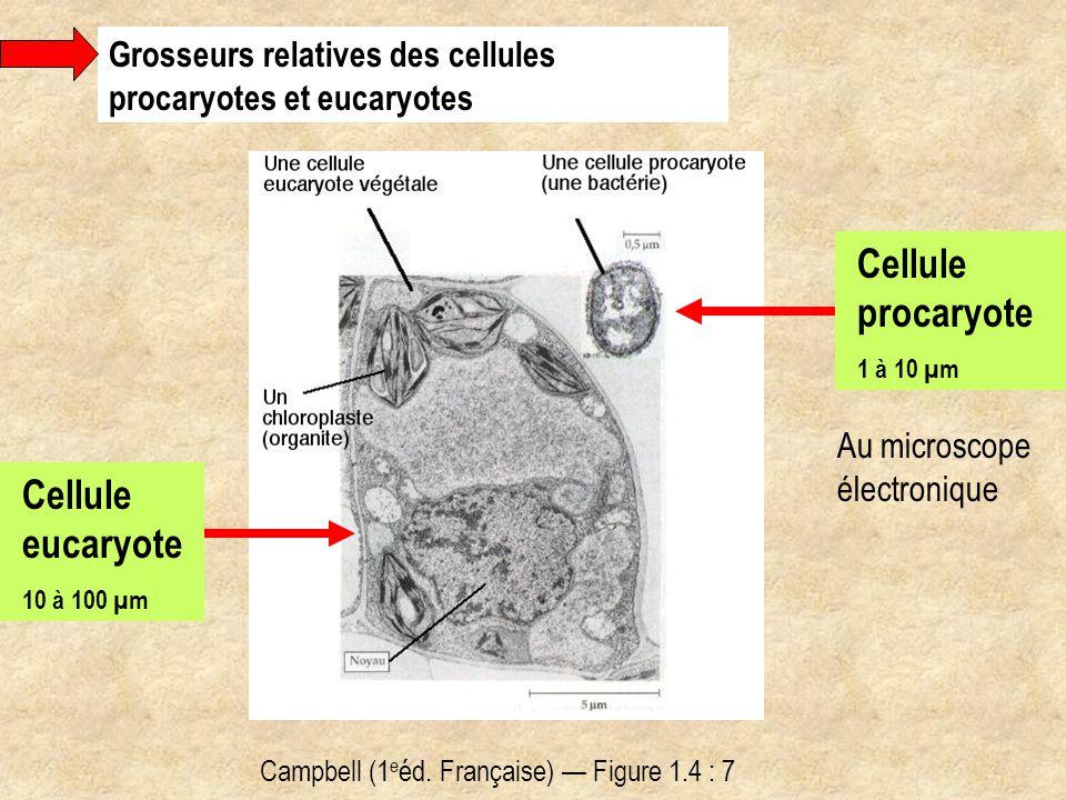 Cellule procaryote Cellule eucaryote