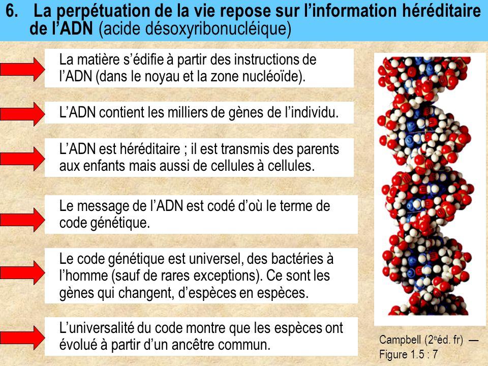 6. La perpétuation de la vie repose sur l'information héréditaire de l'ADN (acide désoxyribonucléique)