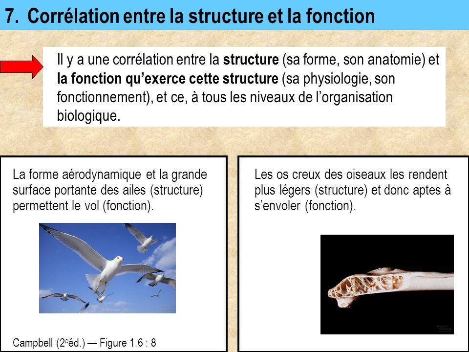 7. Corrélation entre la structure et la fonction