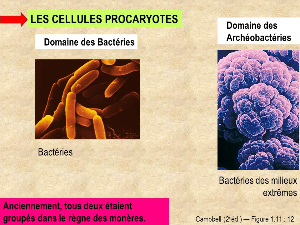 LES CELLULES PROCARYOTES