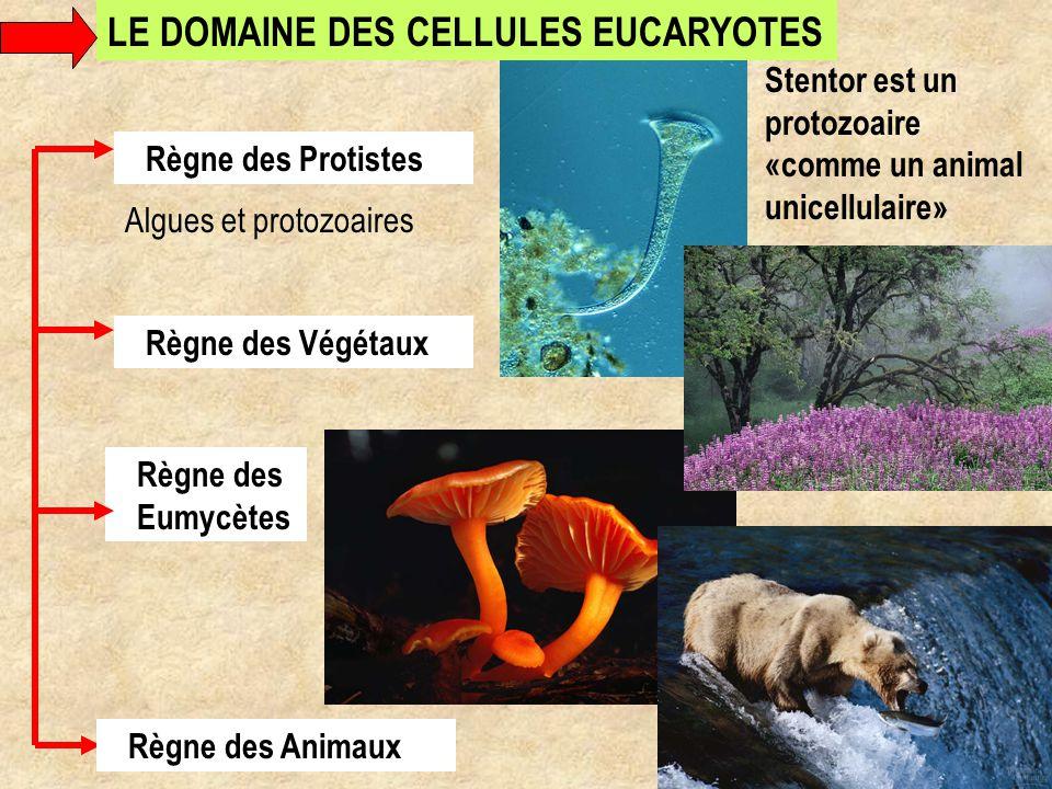 LE DOMAINE DES CELLULES EUCARYOTES