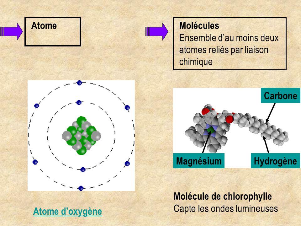 Atome Molécules. Ensemble d'au moins deux atomes reliés par liaison chimique. Molécule de chlorophylle.