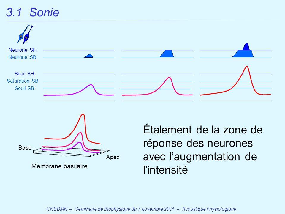 3.1 Sonie Neurone SH. Neurone SB. Seuil SH. Saturation SB. Seuil SB.