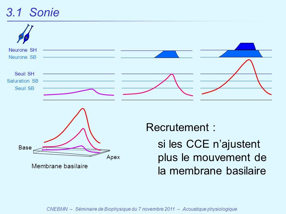 3.1 Sonie Neurone SH. Neurone SB. Seuil SH. Saturation SB. Seuil SB. Recrutement :