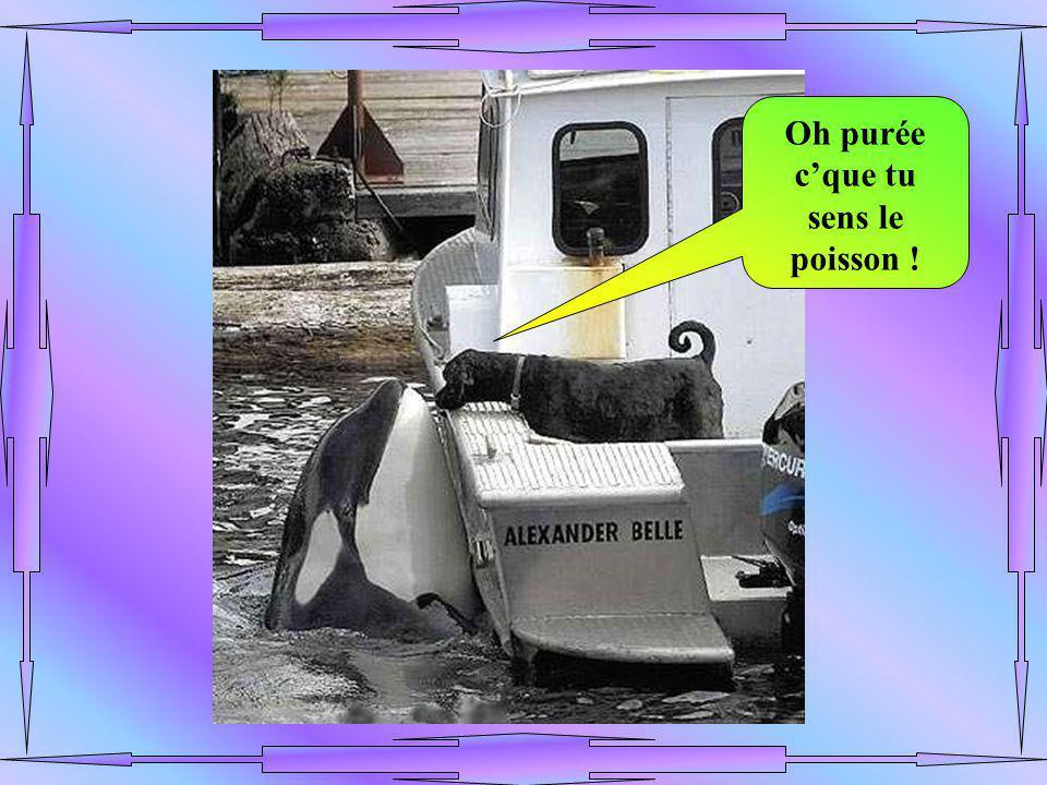 Oh purée c'que tu sens le poisson !