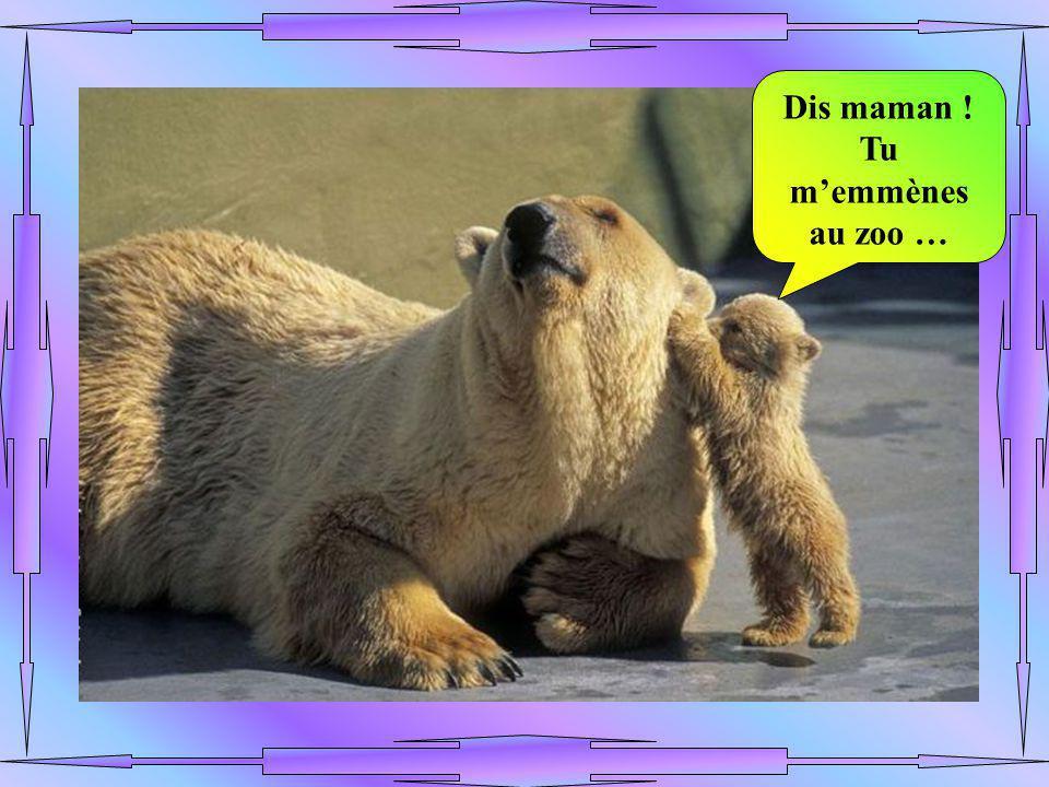 Dis maman ! Tu m'emmènes au zoo …