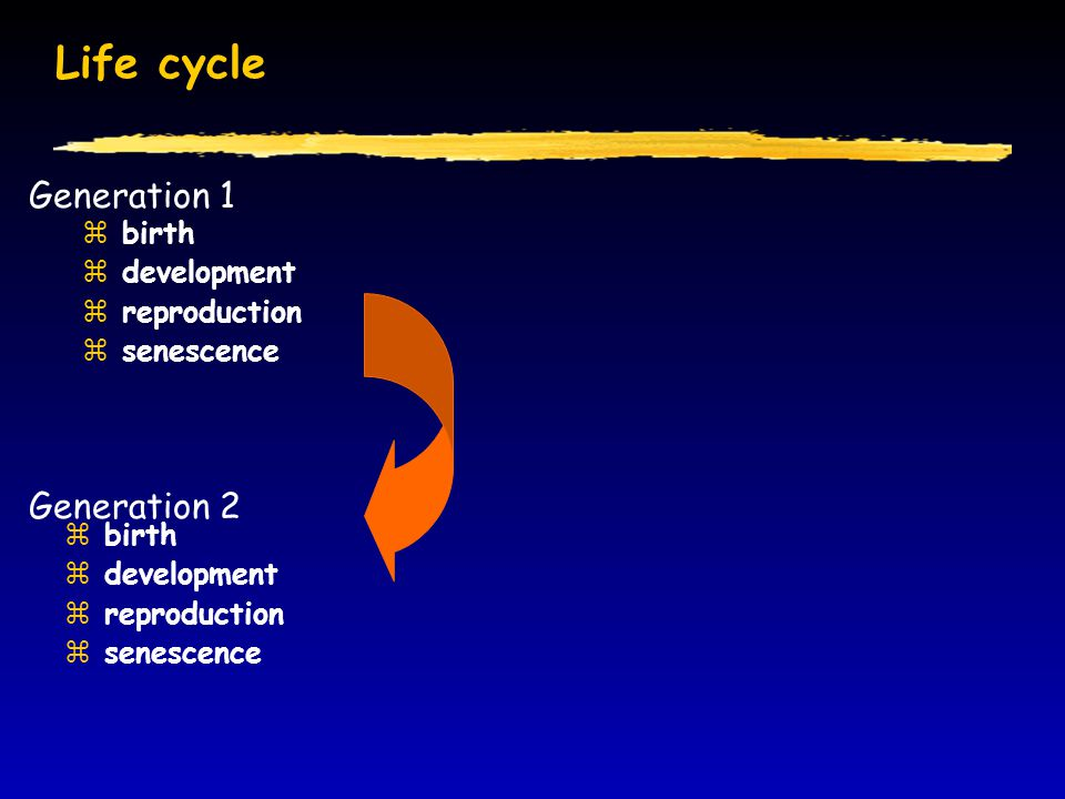 Life cycle Generation 1 Generation 2 birth development reproduction