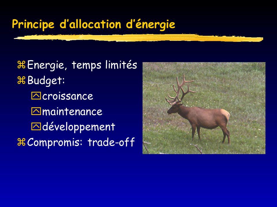 Principe d'allocation d'énergie