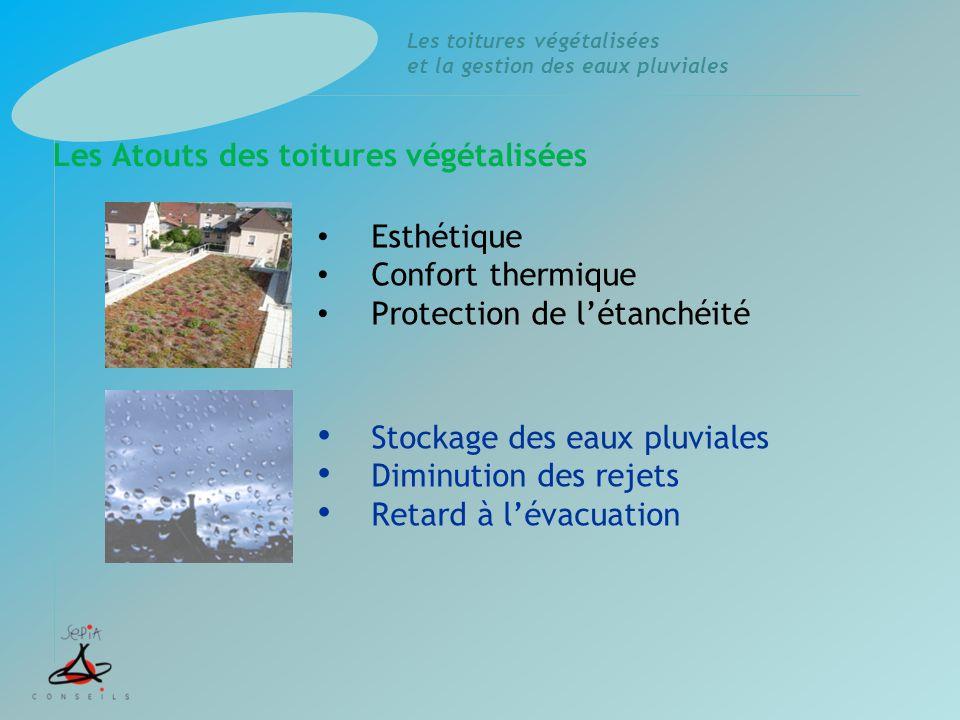 Les Atouts des toitures végétalisées