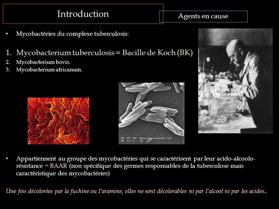 Introduction Mycobacterium tuberculosis = Bacille de Koch (BK)