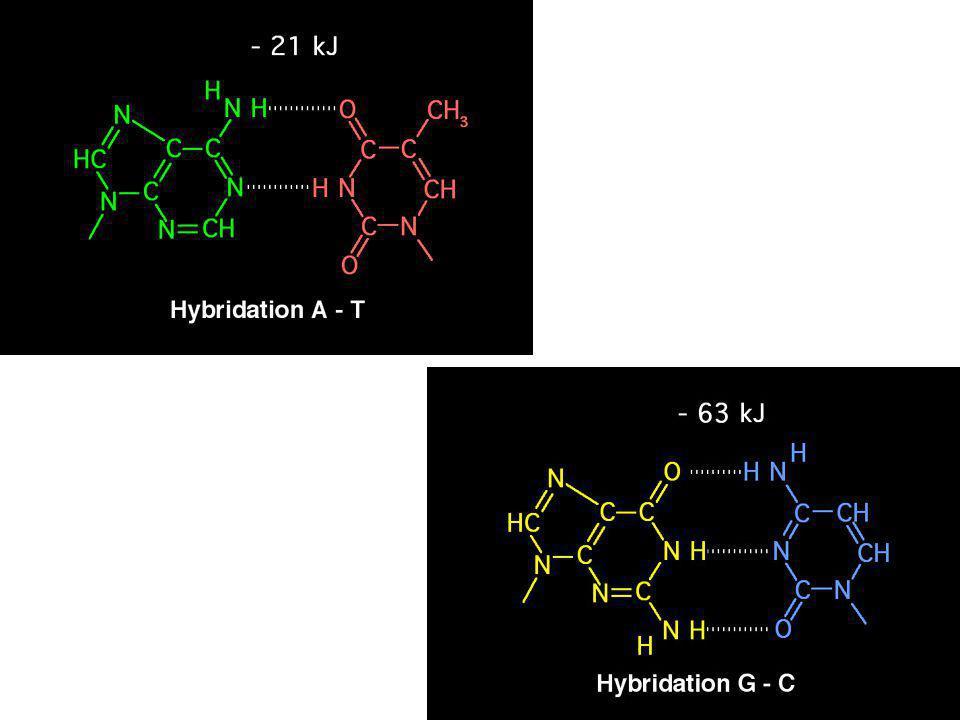 Les liaisons hydrogène entre bases azotées: