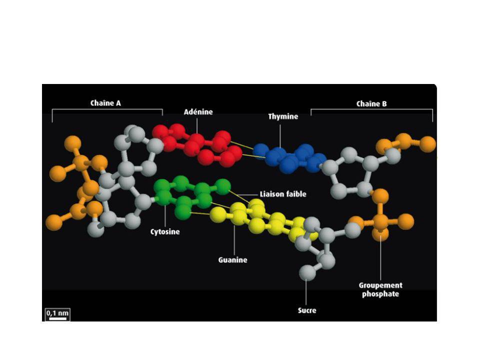 Liaisons hydrogène, autre représentation