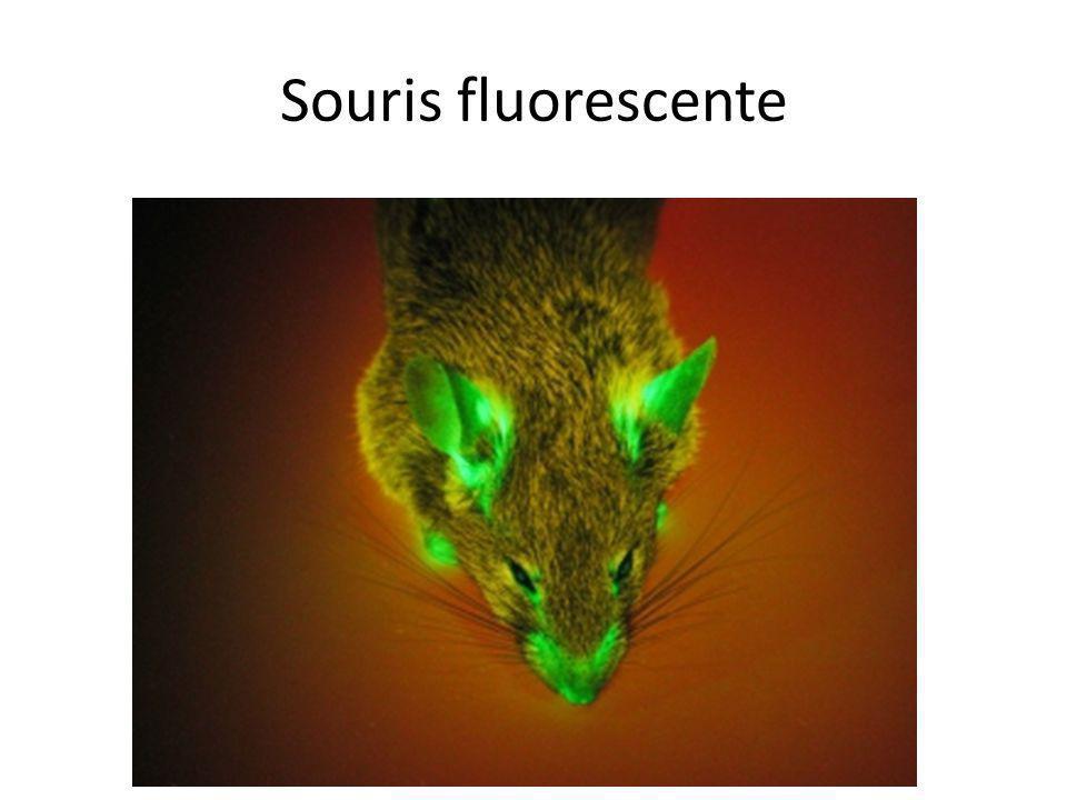 Souris fluorescente Visible sur peau nue, pas sur poils