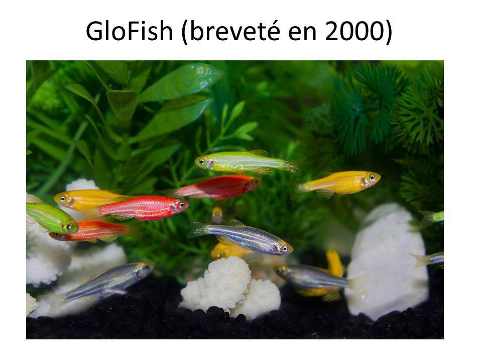GloFish (breveté en 2000)