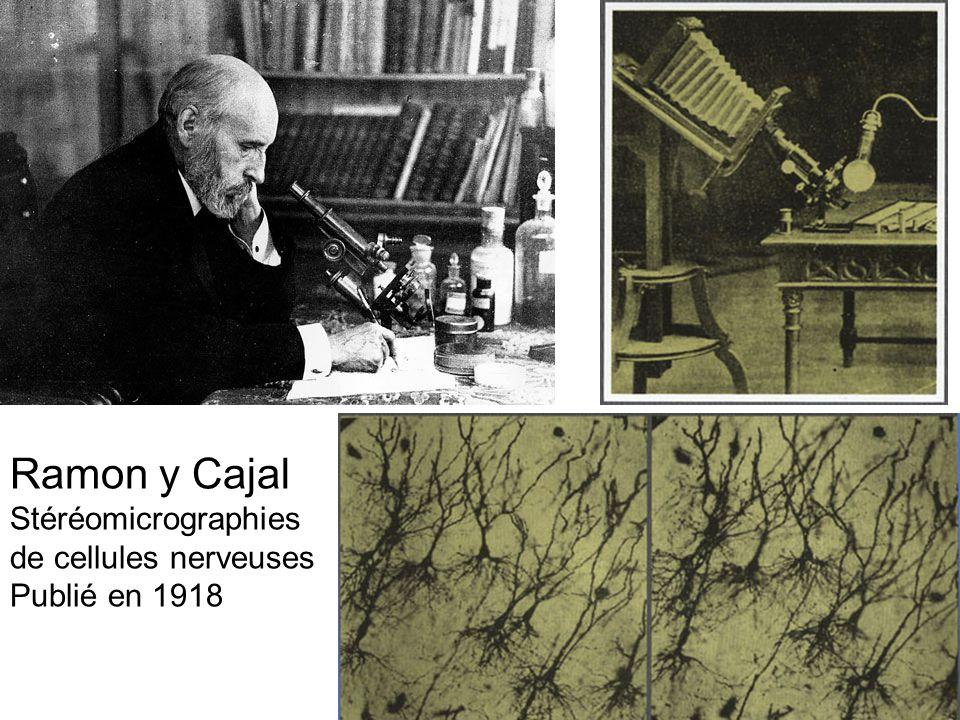 Ramon y Cajal Stéréomicrographies de cellules nerveuses Publié en 1918