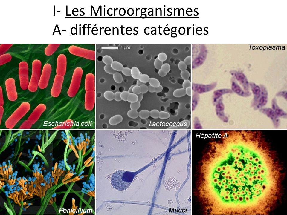 I- Les Microorganismes A- différentes catégories