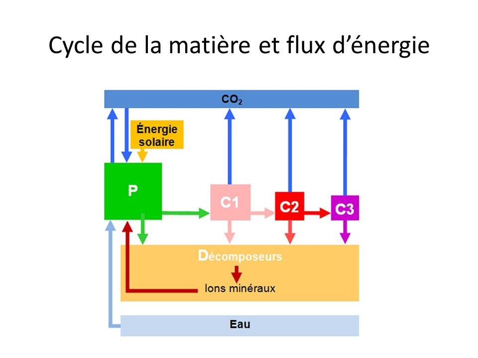 Cycle de la matière et flux d'énergie