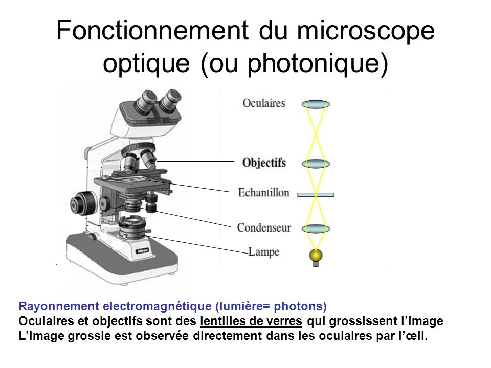 Fonctionnement du microscope optique (ou photonique)