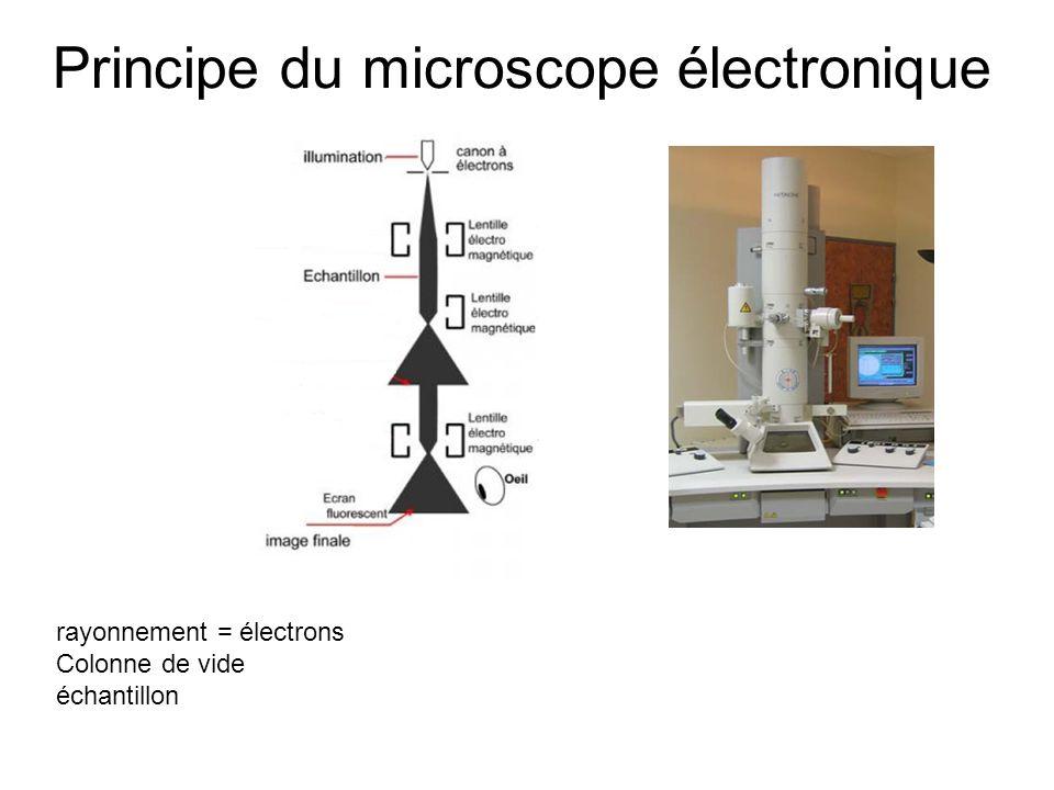 Principe du microscope électronique