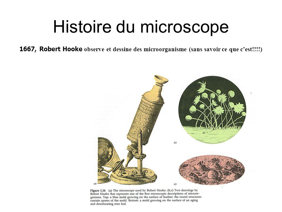 Histoire du microscope