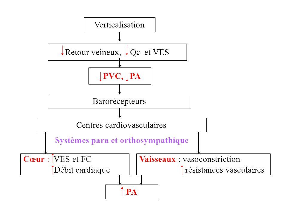 Systèmes para et orthosympathique