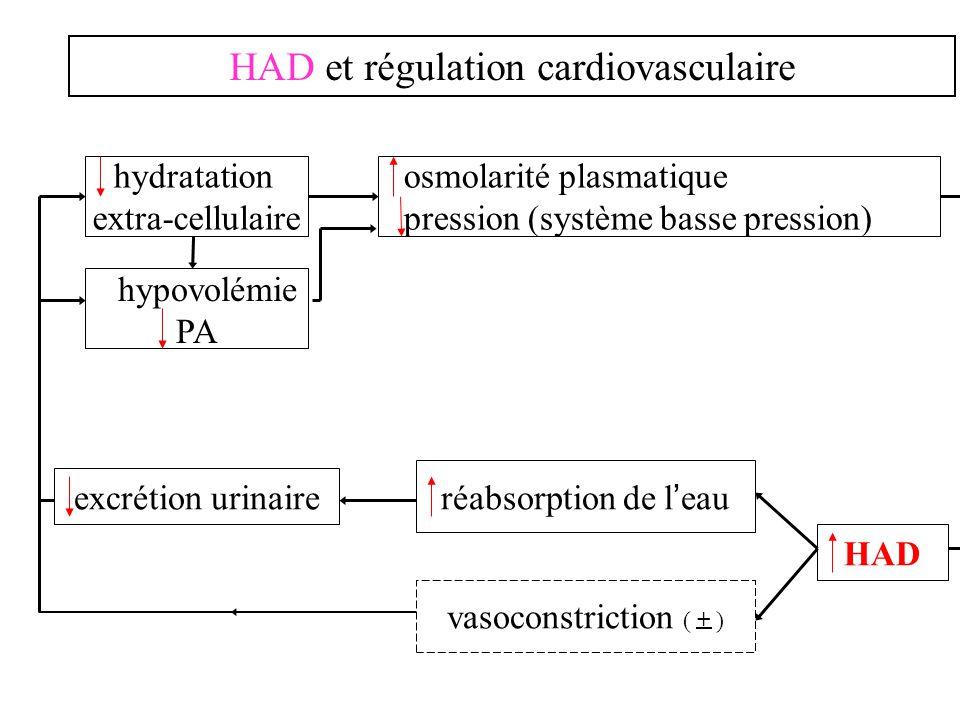 HAD et régulation cardiovasculaire