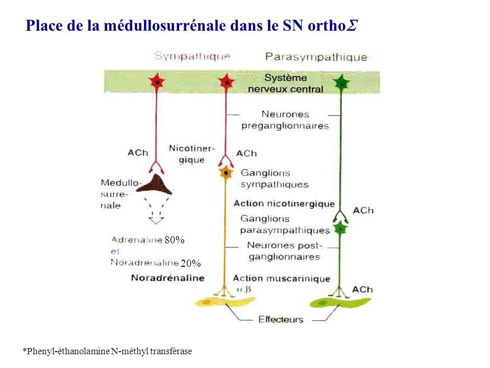 Place de la médullosurrénale dans le SN ortho