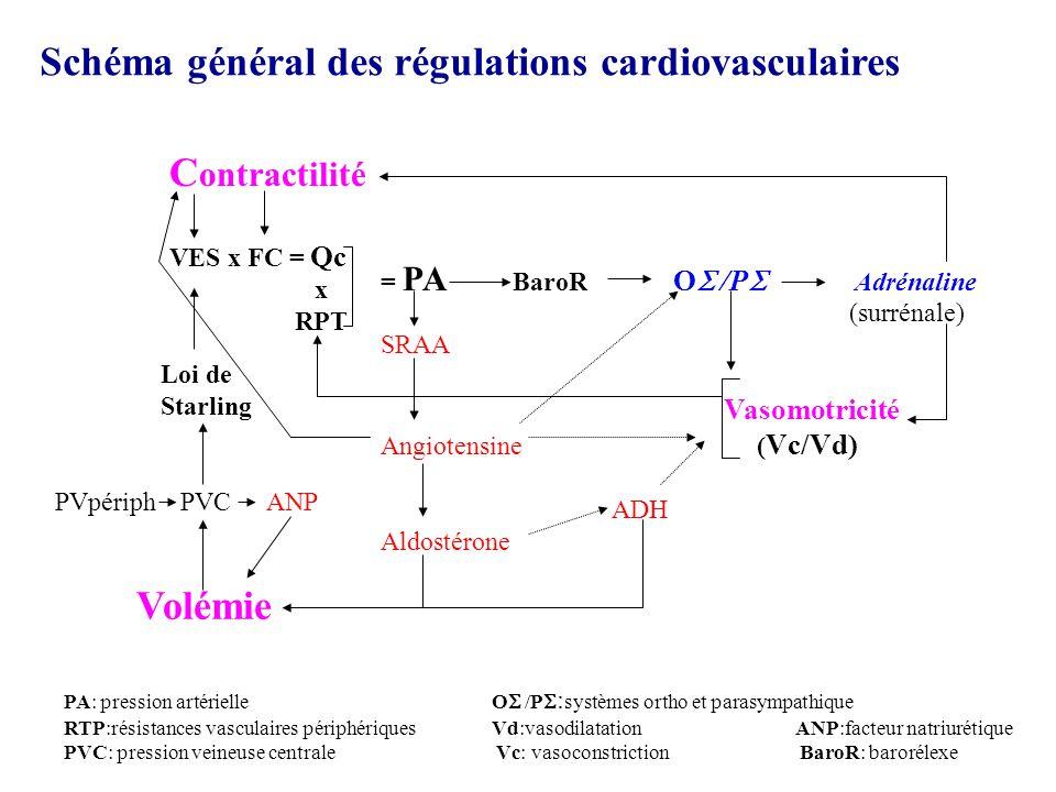 Schéma général des régulations cardiovasculaires