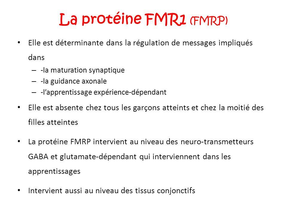 La protéine FMR1 (FMRP) Elle est déterminante dans la régulation de messages impliqués dans. -la maturation synaptique.