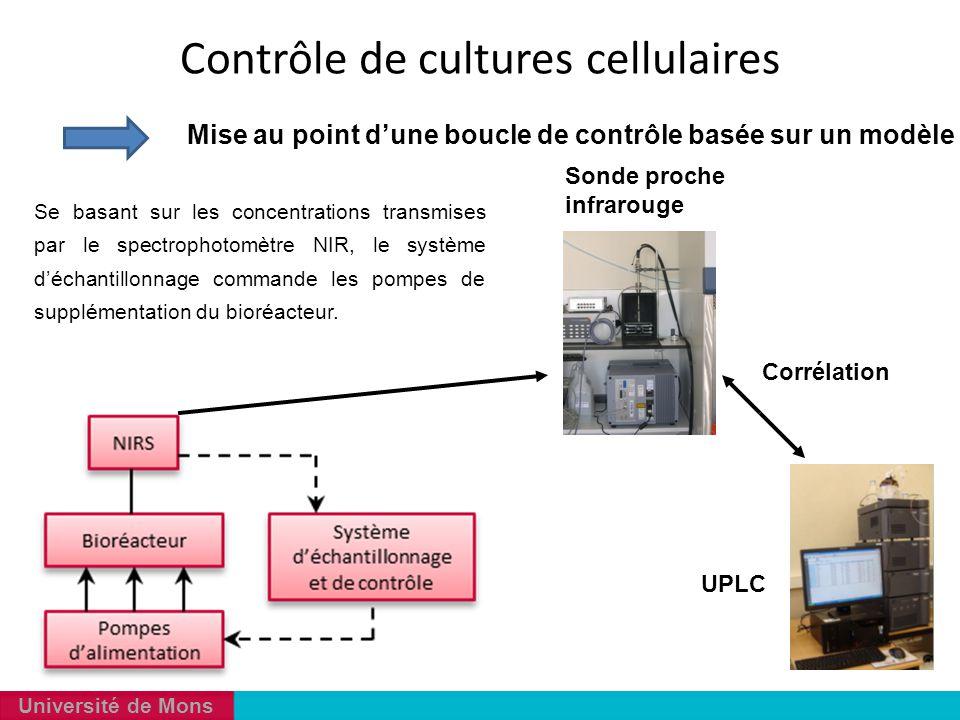 Contrôle de cultures cellulaires