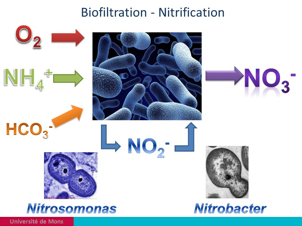 Biofiltration - Nitrification
