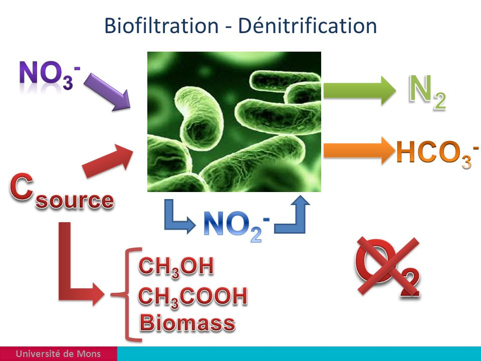 Biofiltration - Dénitrification