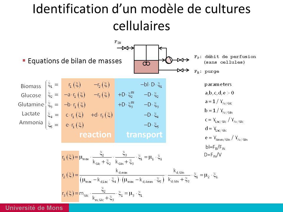 Identification d'un modèle de cultures cellulaires