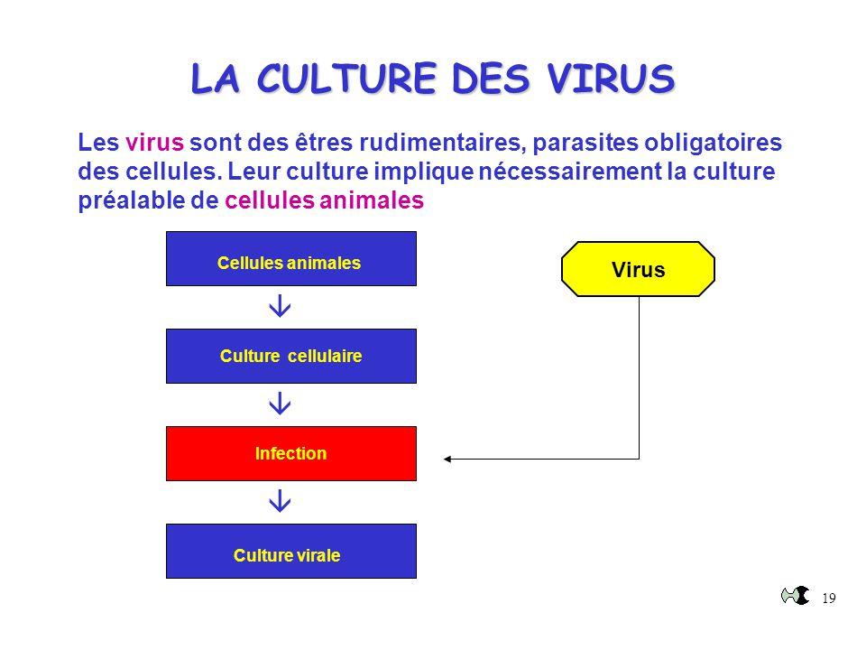 LA CULTURE DES VIRUS