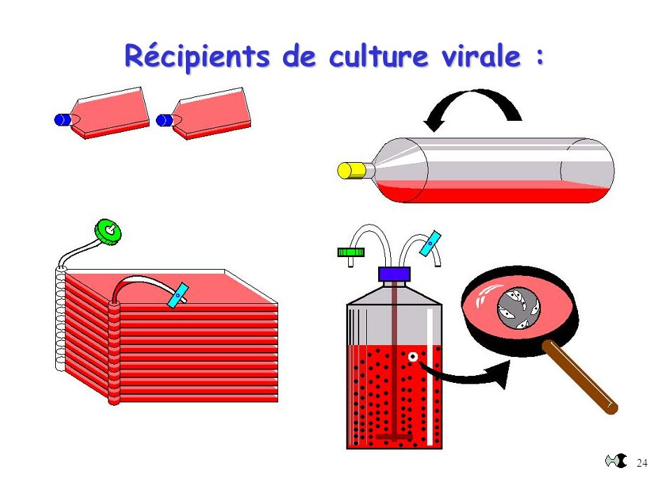 Récipients de culture virale :